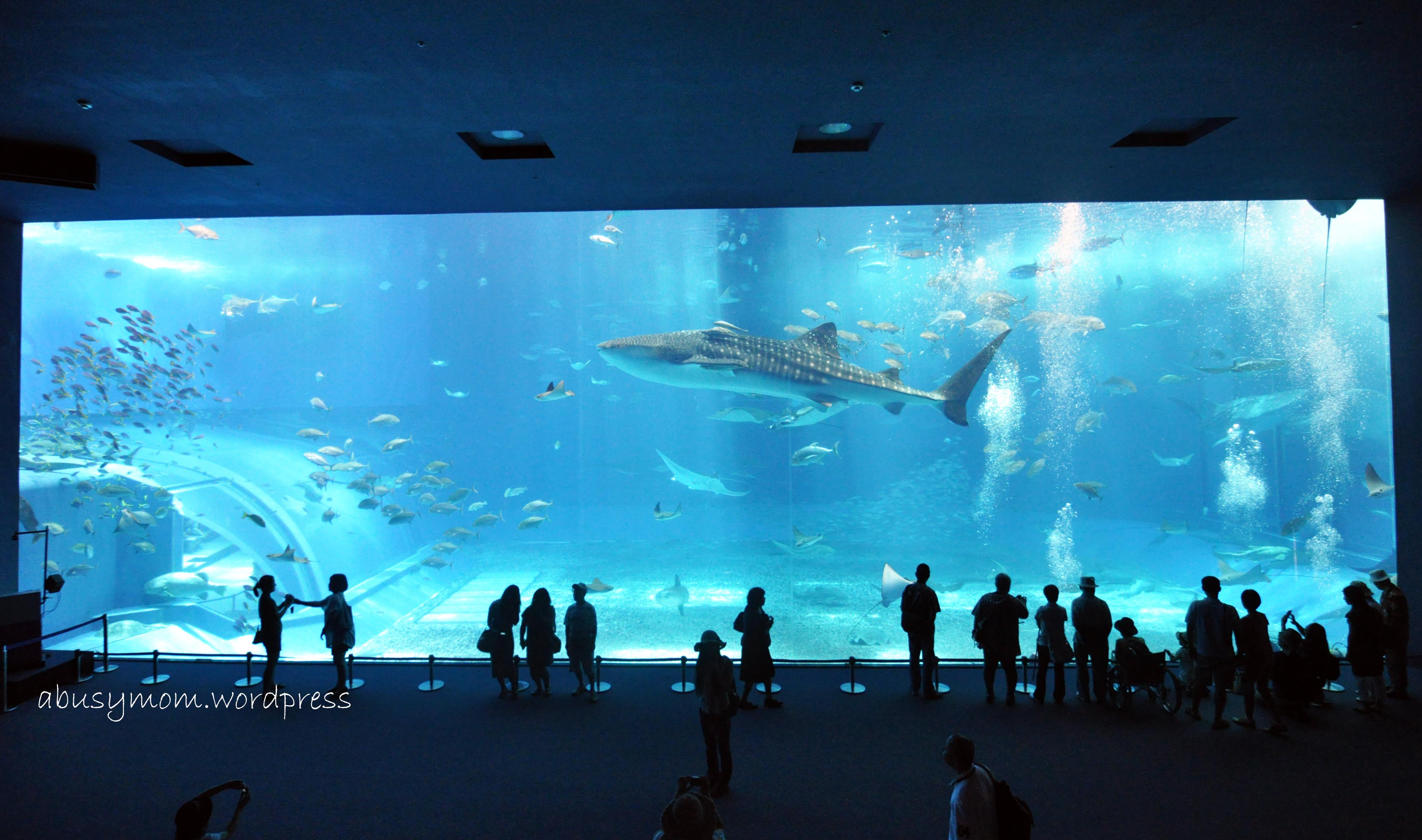 big aquarium - photo #5